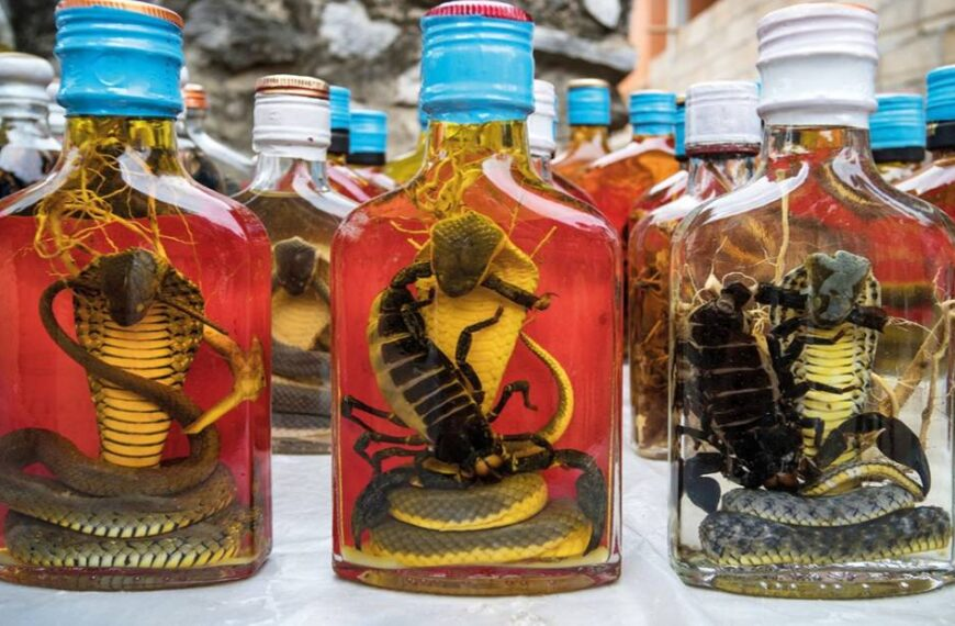 Habu Sake A Snake Wine For The Courageous